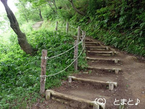直江屋敷からお花畑への道