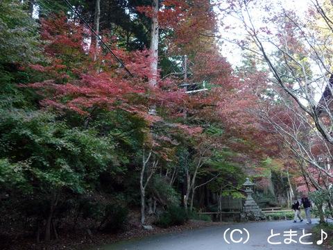 横川(よかわ)参道