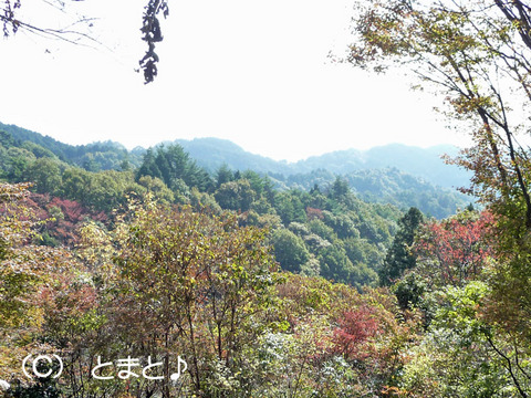 登仙台駐車場からの景色