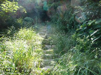 立石岬灯台への山道