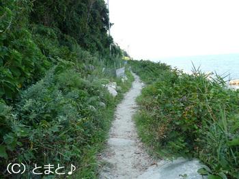 立石岬灯台への道 その2
