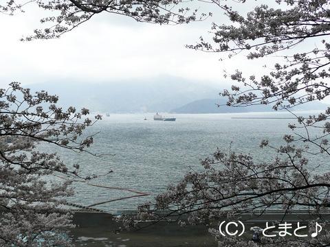 金ヶ崎城跡から敦賀湾を望む