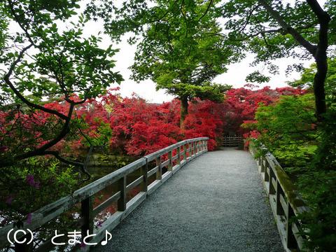 錦水亭への橋