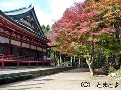 大講堂と紅葉