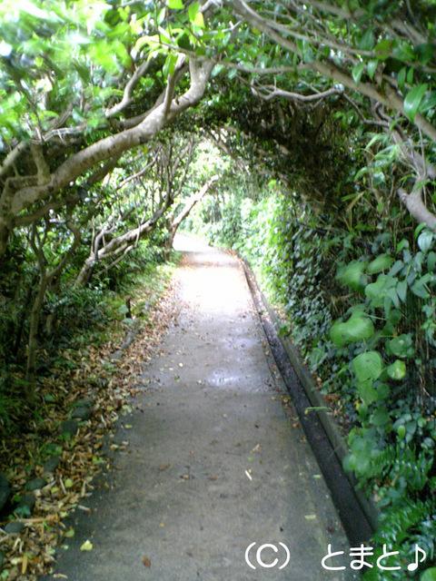 足摺岬灯台への道